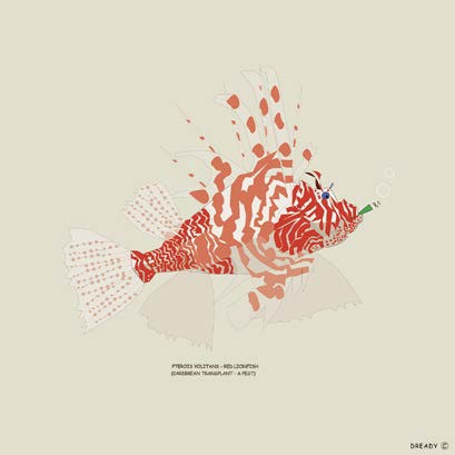 Dready | Lionfish