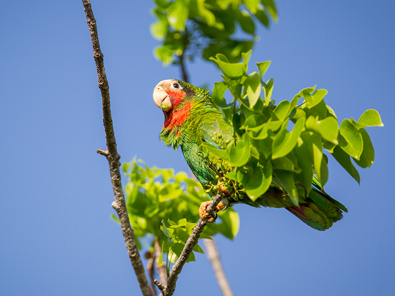 Birdwatcher's paradise