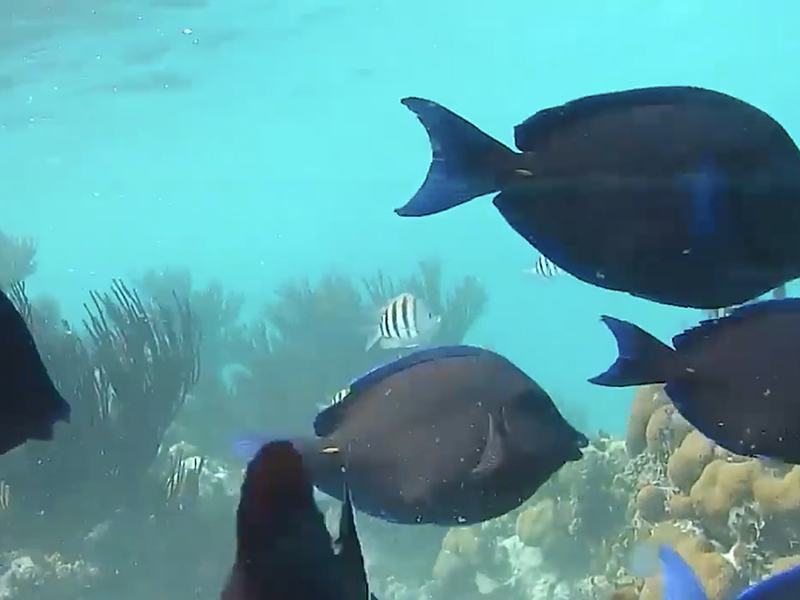 Under the water – reef cam