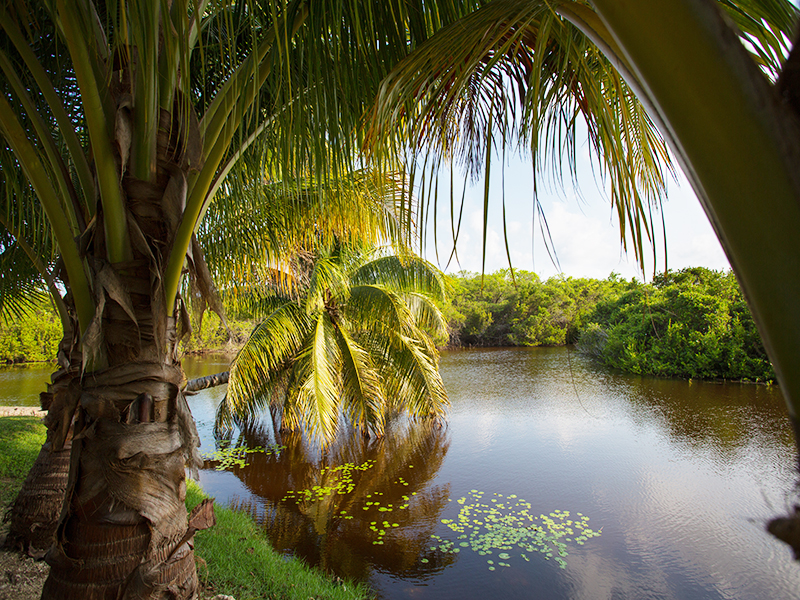 Explore Grand Cayman's East End