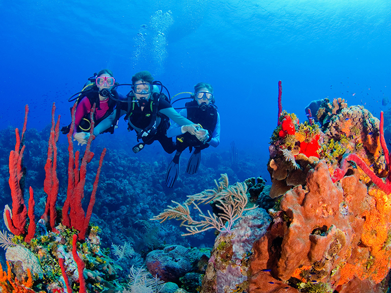 Clearly Cayman dive offer